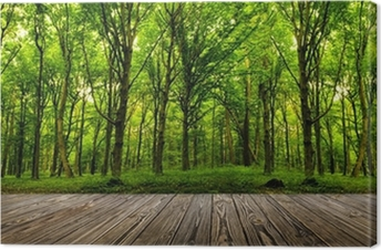 forest trees. Canvas Print