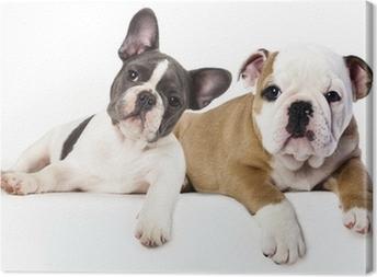 French Bulldog and english Bulldog puppy Canvas Print