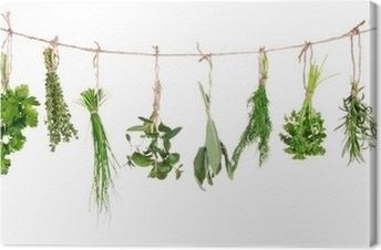 Fresh herbs hanging isolated on white background Canvas Print