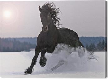 Frisian horse on snow Canvas Print