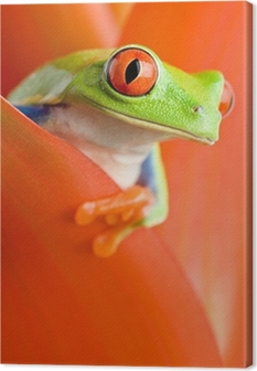 frog in a plant Canvas Print