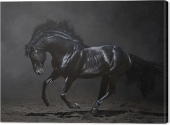 Galloping black horse on dark background Canvas Print