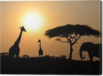 Giraffes and Elephant with Acacia tree with Sunset Canvas Print