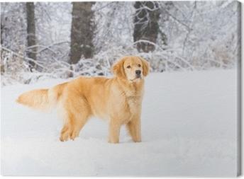 Golden Retriever Dog in the Snow Canvas Print