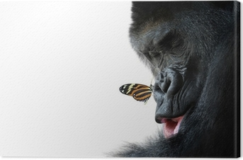 gorilla and butterfly animal friendship Canvas Print