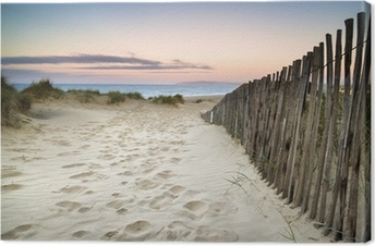 Grassy sand dunes landscape at sunrise Canvas Print