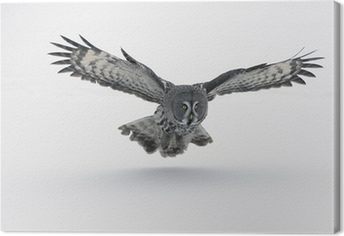 Great-grey owl, Strix nebulosa Canvas Print