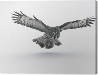 Great-grey owl, Strix nebulosa Canvas Print