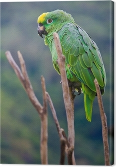 green costa rica parrot Canvas Print