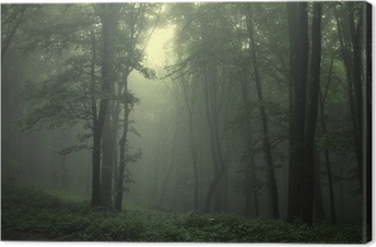 Green forest after rain Canvas Print