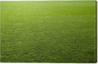 Green grass texture of a soccer field. Canvas Print