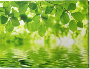 Green leaves background Canvas Print