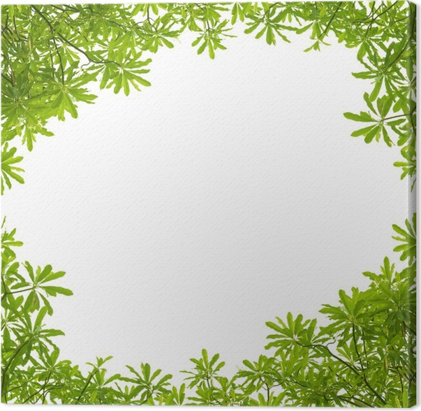 Green leaves frame on white background Canvas Print • Pixers® • We ...
