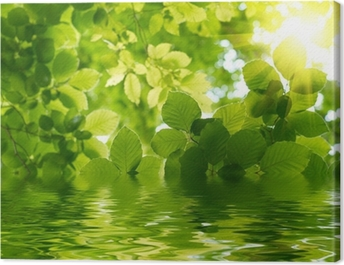 Green leaves with sun ray Canvas Print