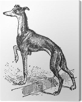 Greyhound, vintage engraving Canvas Print