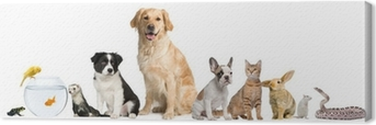 Group of pets sitting in front of white background Canvas Print