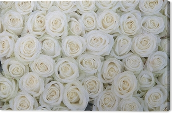 group of white roses after a rainshower Canvas Print