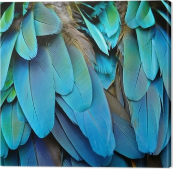 Harlequin Macaw feathers Canvas Print