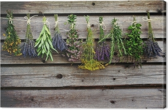Herbs drying on the wooden barn in the garden Canvas Print