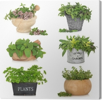 Herbs in Containers Canvas Print