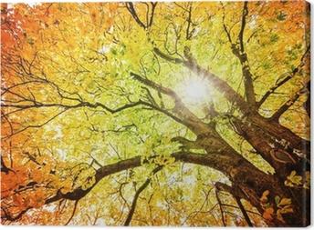 Herbst-Baum Canvas Print