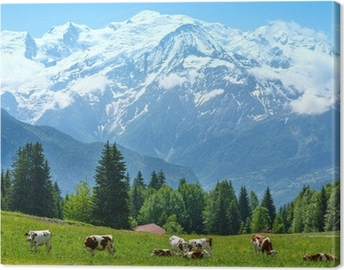 Herd cows on glade and Mont Blanc mountain massif view Canvas Print