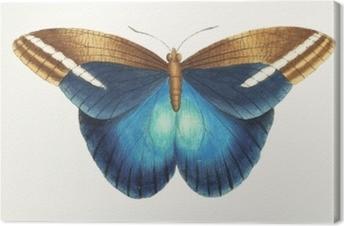 Illustration of animal artwork Canvas Print