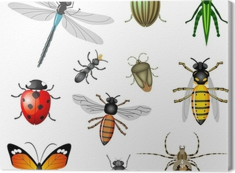 Insects or bugs, vector collection Canvas Print