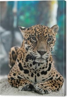 jaguar ( Panthera onca ) Canvas Print