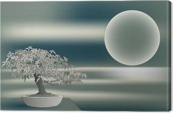 Japanese maple bonsai Canvas Print