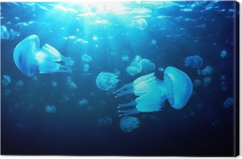 Jellyfish floating in deep blue water, Black Sea Canvas Print