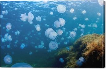 Jellyfishes (Rhizostoma pulmo), in the Black Sea. Canvas Print
