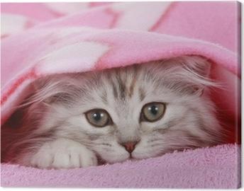 Kätzchen schaut unter Decke hervor - cat hides under blanket Canvas Print