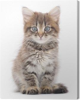 Kitten on a white background Canvas Print