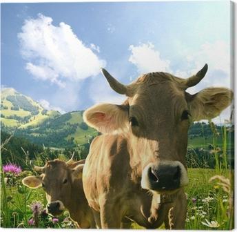 Kühe Canvas Print