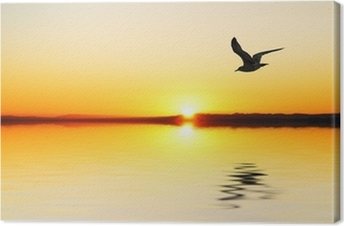 la gabiota al amanecer Canvas Print