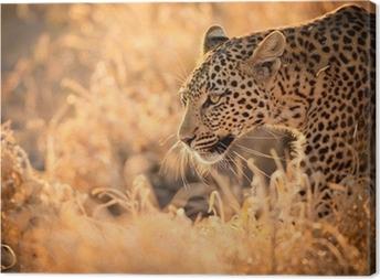 Leopard Walking at Sunset Canvas Print