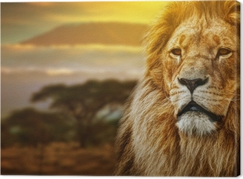 Lion portrait on savanna background and Mount Kilimanjaro Canvas Print