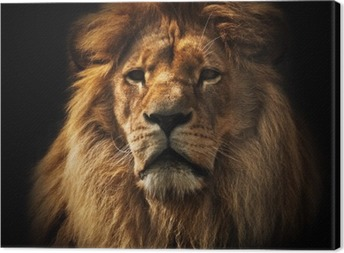 Lion portrait with rich mane on black Canvas Print