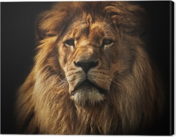 Lion portrait with rich mane on black Canvas Print