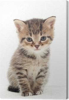 little kitten on white background Canvas Print