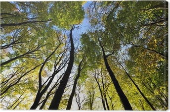 Looking up to the sky in the forest Canvas Print