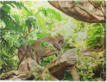 Lying (sleeping) leopard on tree branch Canvas Print