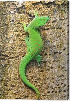 Madagascar day gecko .. Canvas Print