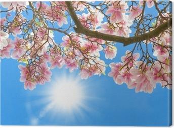 Magnolia in the sun Canvas Print