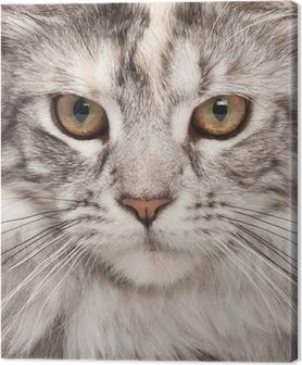 Maine-coon close-up portrait Canvas Print