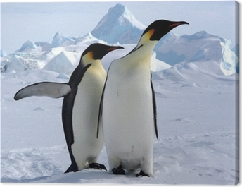 Mais où est le pôle sud ? (Manchots Empereurs/Antarctique) Canvas Print