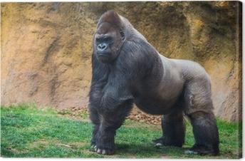 Male gorilla. Canvas Print