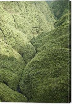 Maui Rainforest. Canvas Print