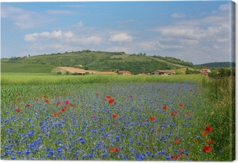 Meadow with cornflowers and poppies in Auvergne Canvas Print
